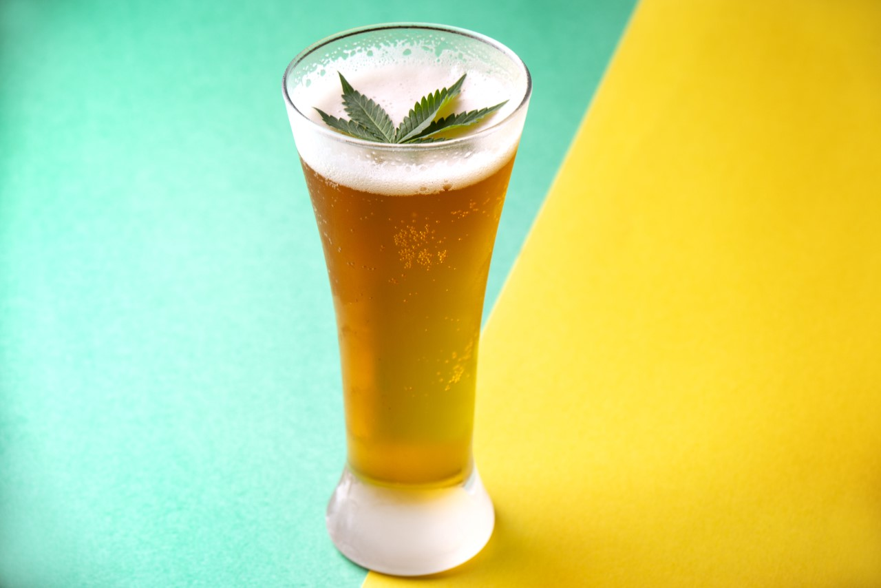Cannabis Infused Drink - Beer with Cannabis leaf floating on top